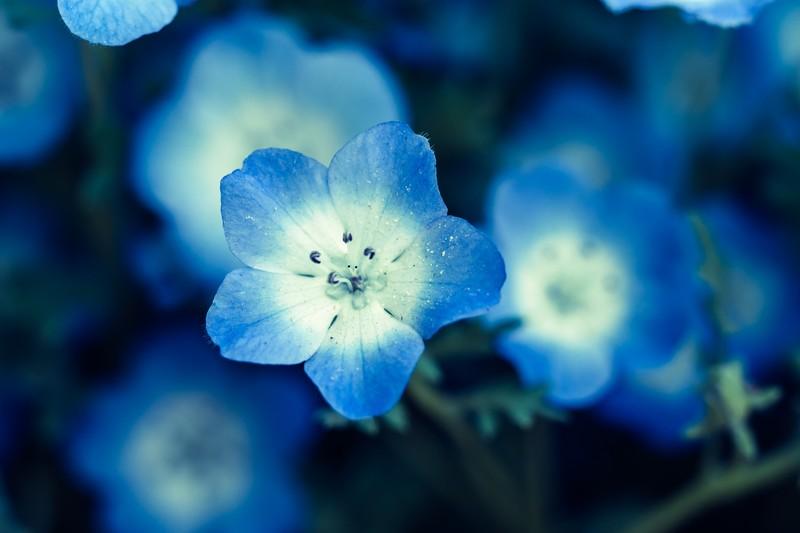 花の<ruby>徴<rt>しるし</rt></ruby>